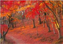秋の休日_家族旅行_静岡